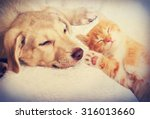 Stock photo kitten and puppy sleeping 316013660