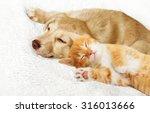 Stock photo kitten and puppy sleeping 316013666