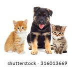 Stock photo puppy and kitten looking 316013669