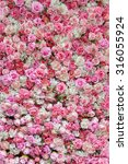 pink and white rose backdrop | Shutterstock . vector #316055924
