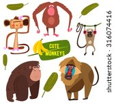 cute fife funny monkeys... | Shutterstock .eps vector #316074416