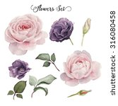 flowers and leaves  watercolor  ... | Shutterstock . vector #316080458