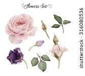 flowers and leaves  watercolor  ... | Shutterstock . vector #316080536