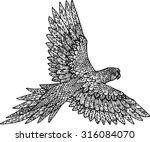hand drawn outline doodle... | Shutterstock .eps vector #316084070