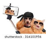 Stock photo dog with cat taking a selfie together with a smartphone 316101956