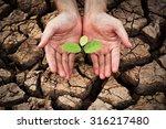 hand nurturing a young green... | Shutterstock . vector #316217480
