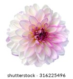 Stock photo light colorful dahlia flower isolated on white background 316225496