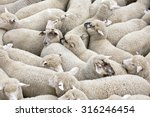 Herd Of Sheep On A Truck