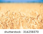 background  backdrop of  yellow ... | Shutterstock . vector #316258370