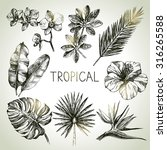 hand drawn sketch tropical... | Shutterstock .eps vector #316265588