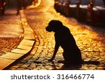 Stock photo silhouette of the dog on the street at sunset 316466774