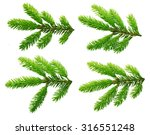 pine tree branch isolated on... | Shutterstock . vector #316551248