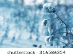 Winter Background. Thistle...