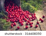 Fresh Cranberry  Cowberry  On...