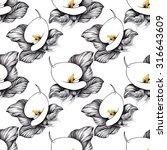 black and white calla lilly... | Shutterstock . vector #316643609