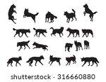 Australian Dingo Silhouettes...