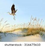 Great Blue Heron Flies Over The ...