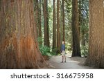 man standing looking at giant... | Shutterstock . vector #316675958