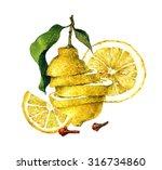citrus fruit_1. watercolor... | Shutterstock . vector #316734860