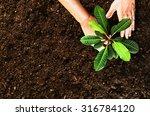Planting A Beautiful  Green...