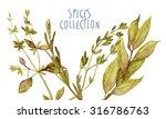 watercolor herbs   Shutterstock . vector #316786763