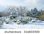 Winter Landscape With Trees In...