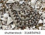 horned viper  vipera ammodytes  ... | Shutterstock . vector #316856963
