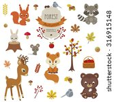 woodland animals in autumn time.... | Shutterstock .eps vector #316915148
