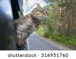 Stock photo  head cat out of a car window in motion summer 316951760