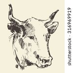 cow head  dutch cattle breed ... | Shutterstock .eps vector #316969919