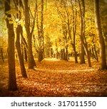 autumn forest in sunset light.... | Shutterstock . vector #317011550