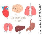 cute cartoon anatomy vector set ... | Shutterstock .eps vector #317036903