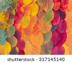 colorful bright autumn leaves... | Shutterstock . vector #317145140