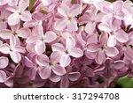 Macro Image Of Spring Lilac...