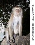 Small photo of Cute but pesky monkey sitting on a rock on a beach at Krabi in Thailand posing cheekily at the camera