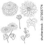 hand drawn chrysanthemum flower ... | Shutterstock .eps vector #317303774