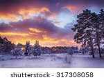 Winter Scene  Snow Forest At...