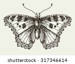 butterfly  moth  isolated.... | Shutterstock .eps vector #317346614