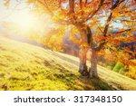 rock massif in the carpathians. | Shutterstock . vector #317348150