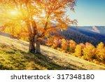 rock massif in the carpathians. | Shutterstock . vector #317348180