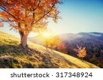 forest road in the autumn.... | Shutterstock . vector #317348924