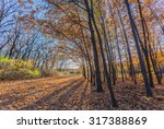 romantic walking path in the... | Shutterstock . vector #317388869