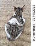 Small photo of Rump of a pet cat sitting on a door mat. View from above. Ailurophobia - fear of cats.