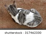 Dorsal Side Of A Pet Cat...