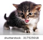small  kitten with mouth open... | Shutterstock . vector #317525018