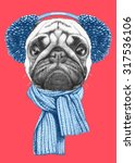 Portrait Of Pug Dog With Scarf...