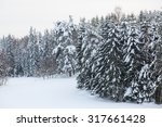 Snow Covered Forest And Field...