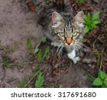 colorful cat with green eyes... | Shutterstock . vector #317691680