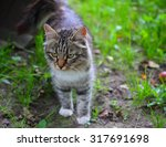 colorful cat with green eyes... | Shutterstock . vector #317691698