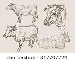 cows vector  hand draw sketch    Shutterstock .eps vector #317707724